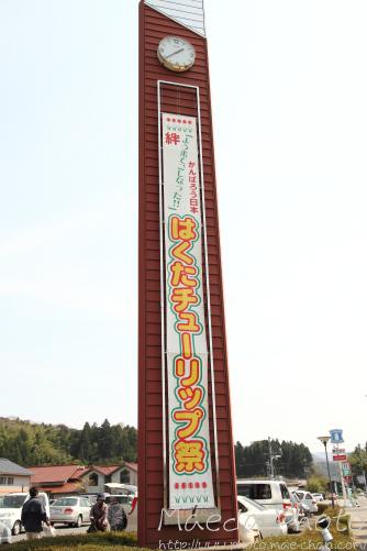伯太町のチューリップ2012画像1