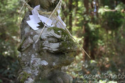 滝山公園2012画像4