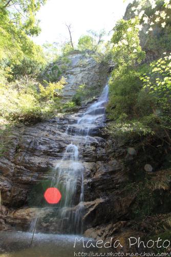 滝山公園2012画像14