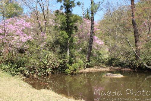 滝山公園2012画像18