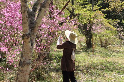 滝山公園2012画像19