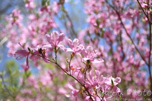 滝山公園2012画像20
