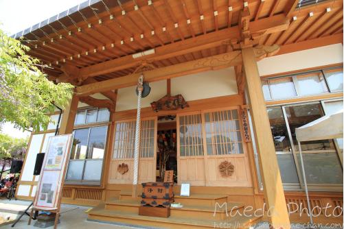 住雲寺の藤2012画像10