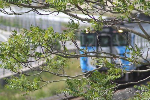 鬼太郎列車を撮ってみたけども画像1