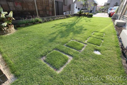 我が家の芝生2012画像