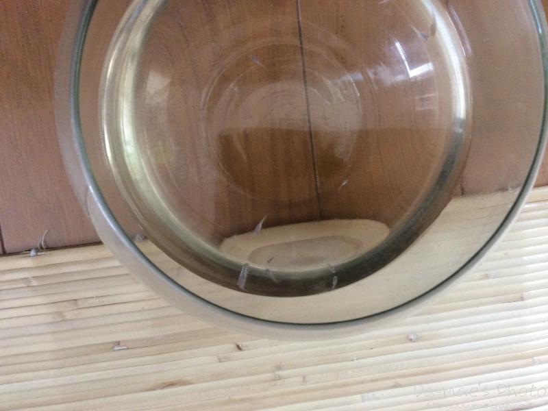 メダカの稚魚本水槽へ画像1