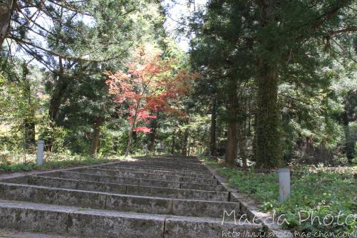 滝山公園2012画像3