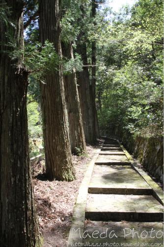 滝山公園2012画像6