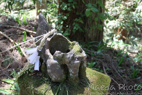 滝山公園2012画像9