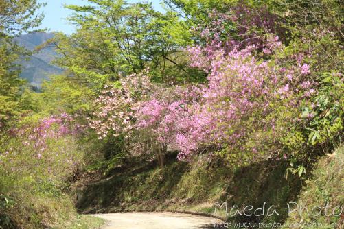 滝山公園2012画像16