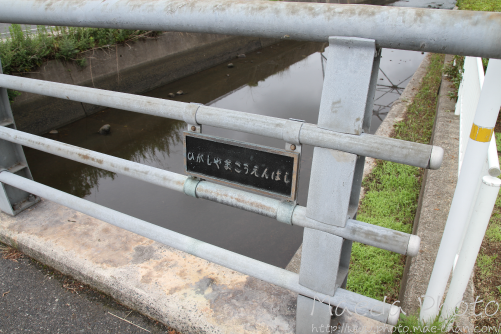米子の米川2012画像3