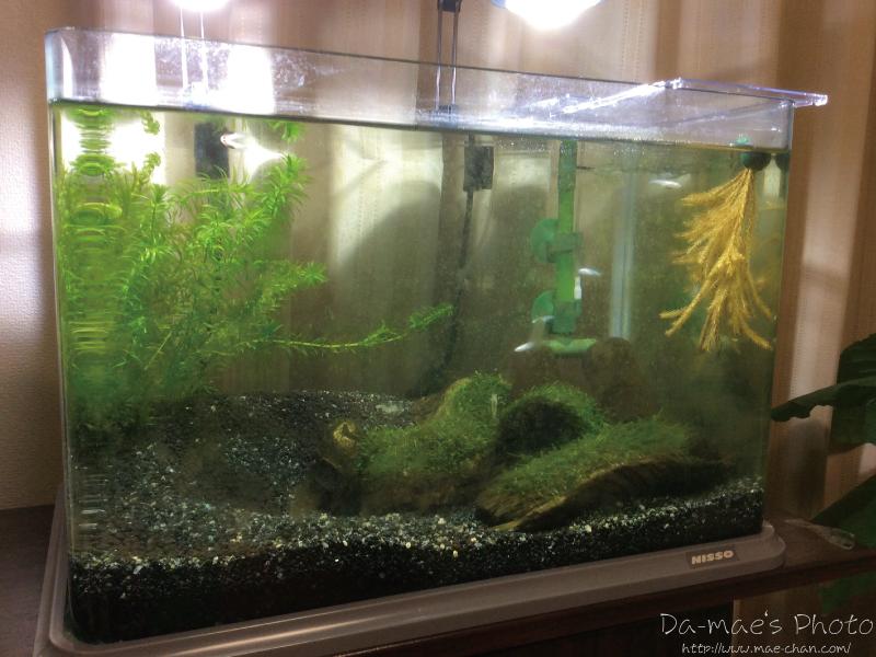 増え続けていくメダカの稚魚達画像3